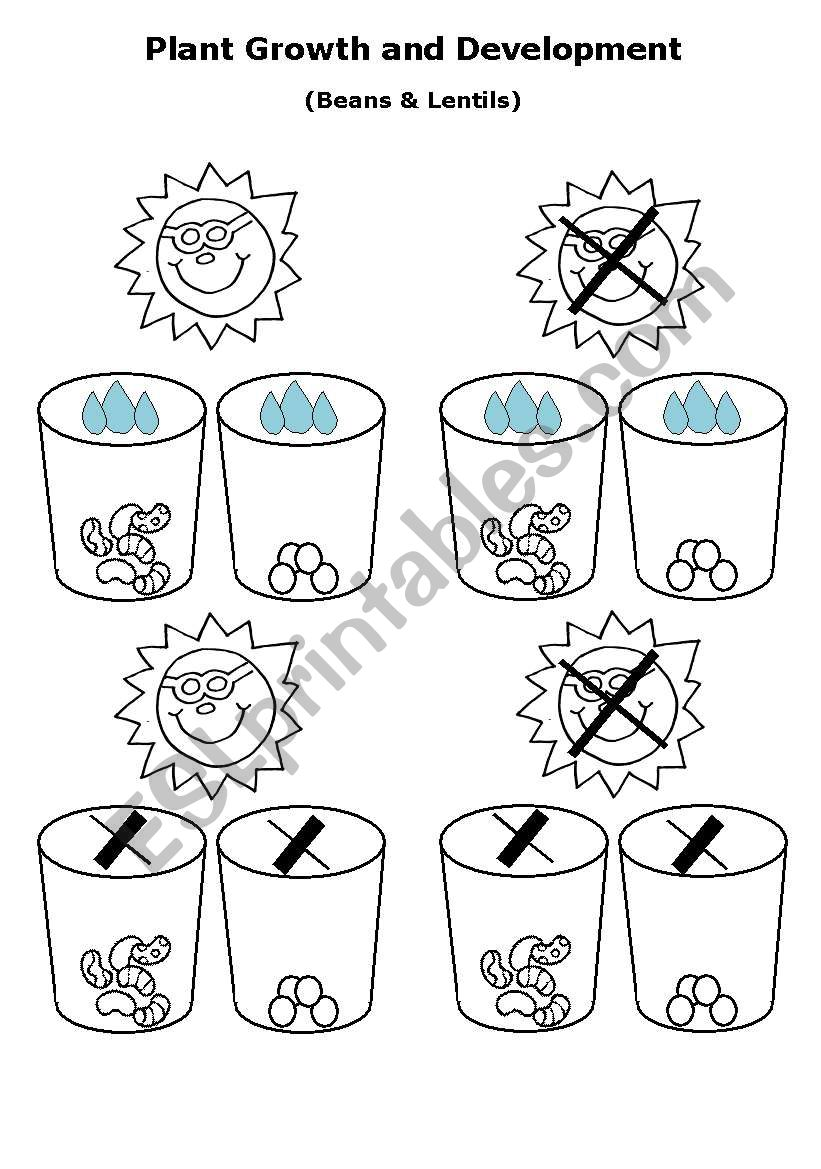 Plant Growth and Development - ESL worksheet by sof8
