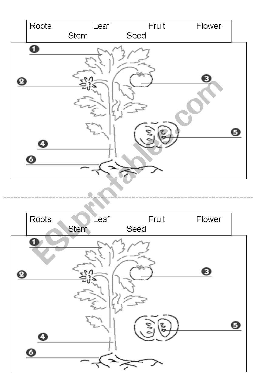 plant parts esl worksheet by mpng. Black Bedroom Furniture Sets. Home Design Ideas