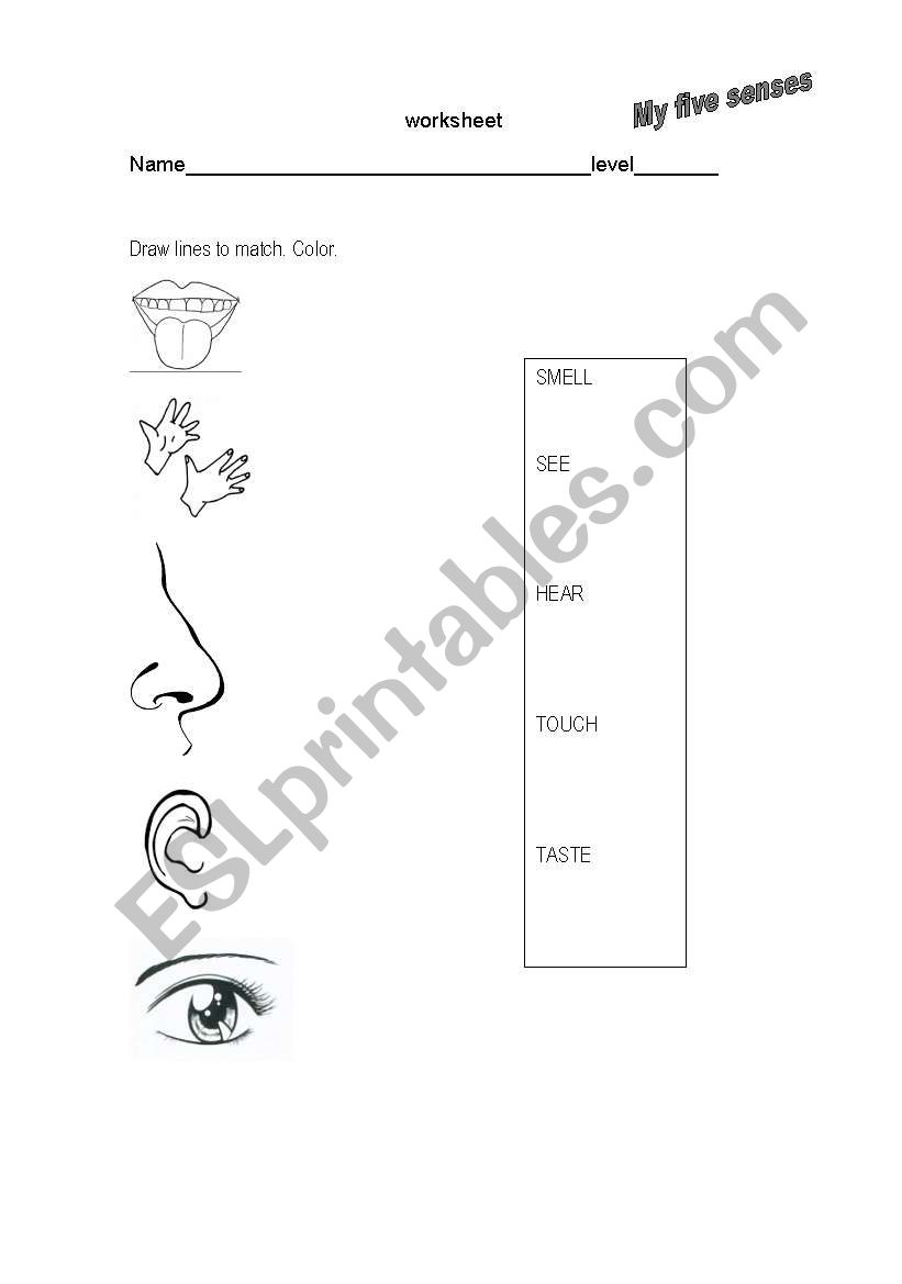 my five senses worksheet