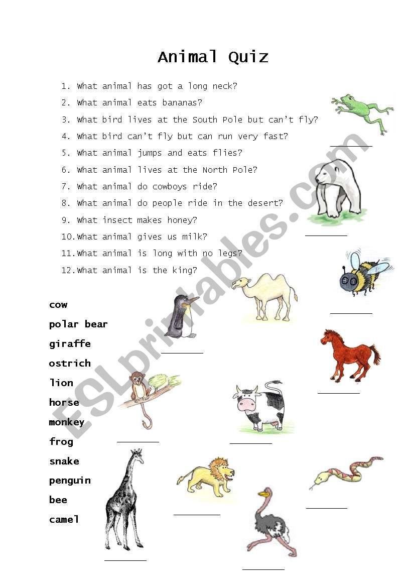 animal quiz esl worksheet by pictogram. Black Bedroom Furniture Sets. Home Design Ideas