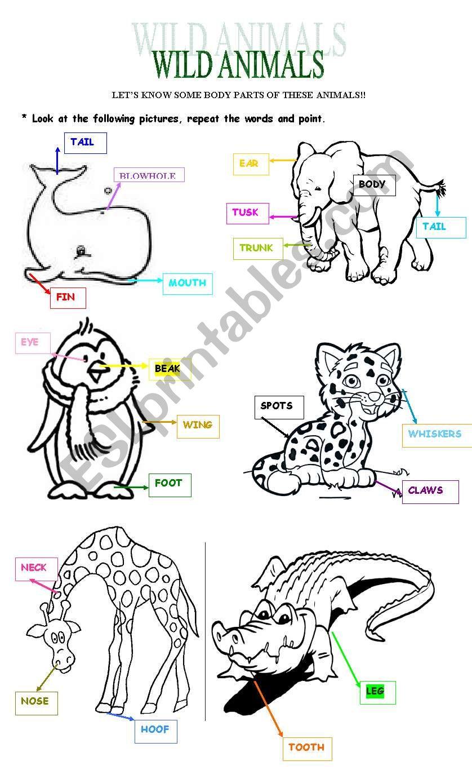 WILD ANIMALS - BODY PARTS worksheet