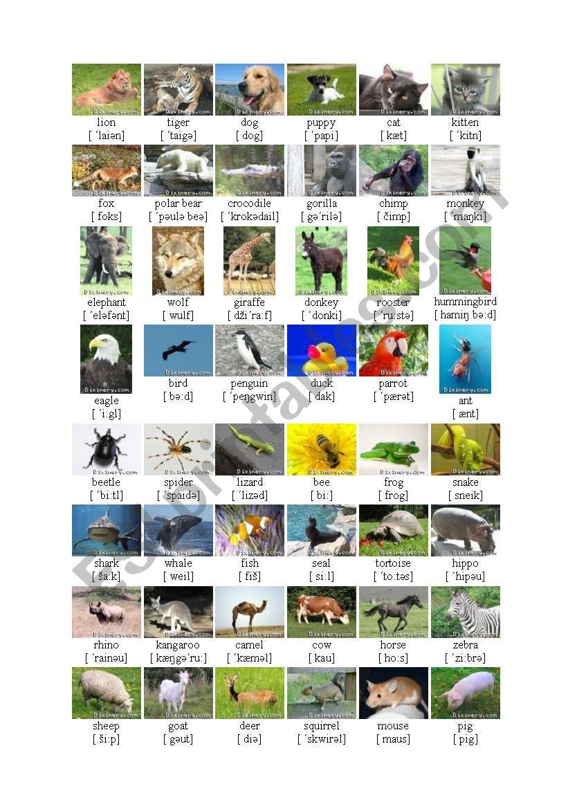Animals worksheet