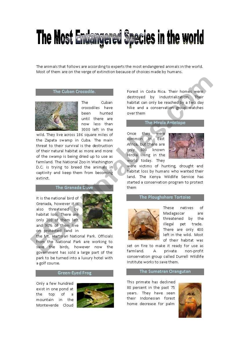 The most endangered species reading-environmental problems