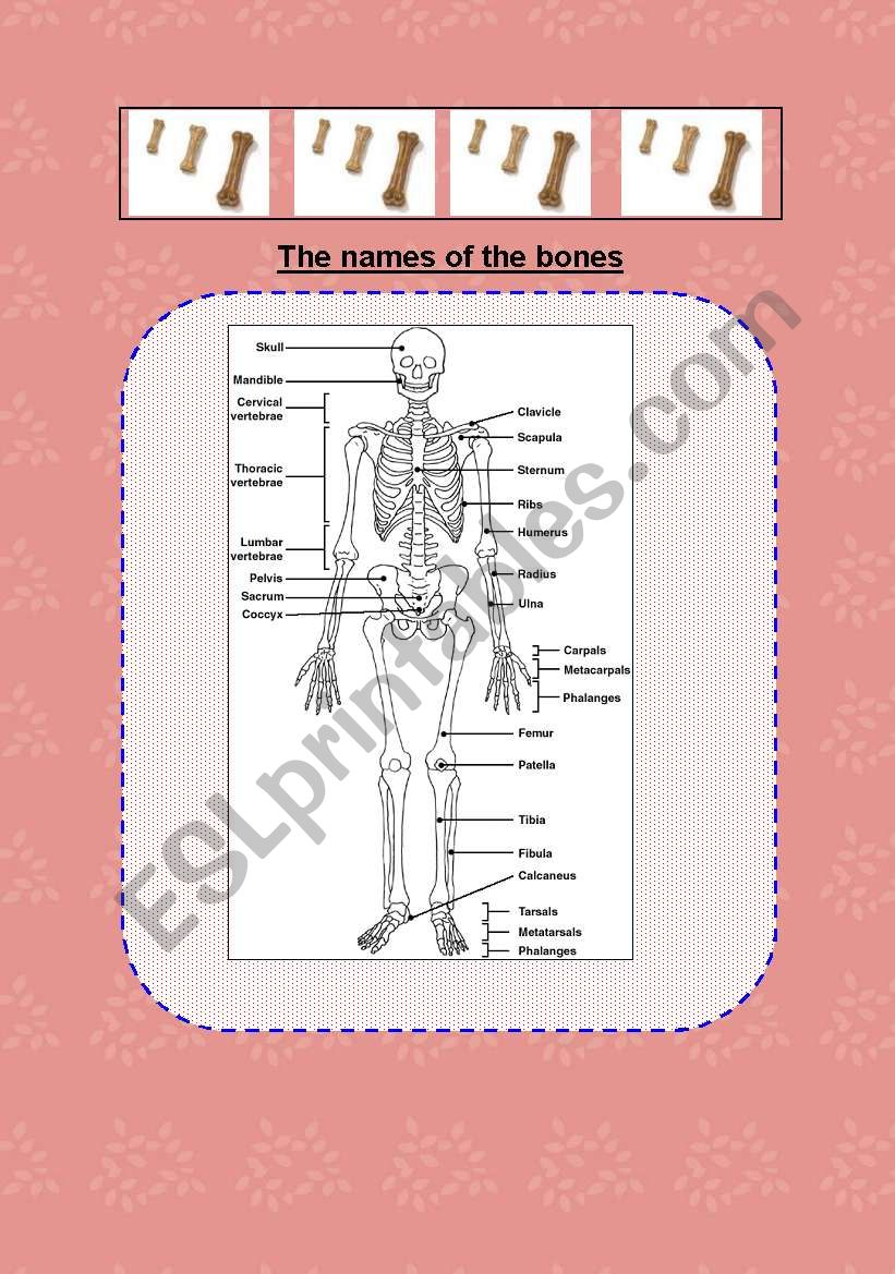 bones searching worksheet