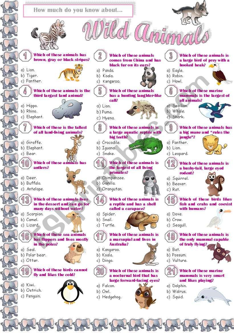 Wild Animals - Quiz worksheet