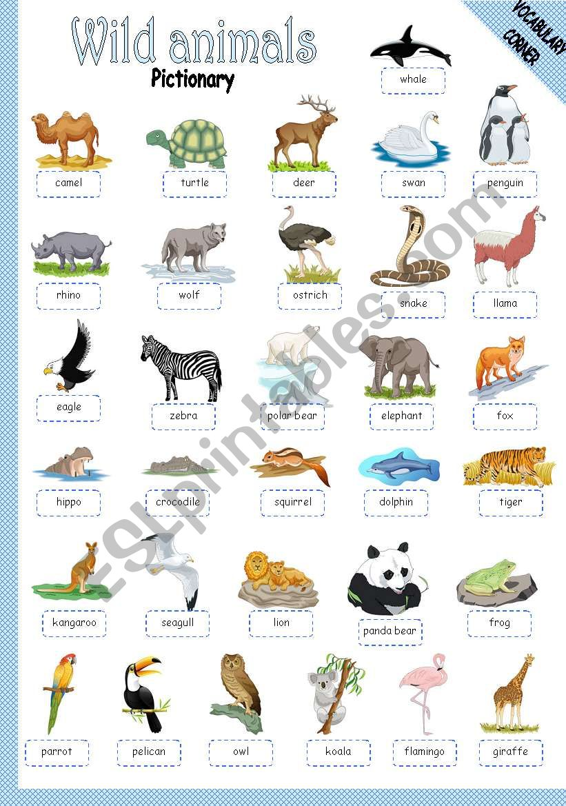 WILD ANIMALS - PICTIONARY worksheet