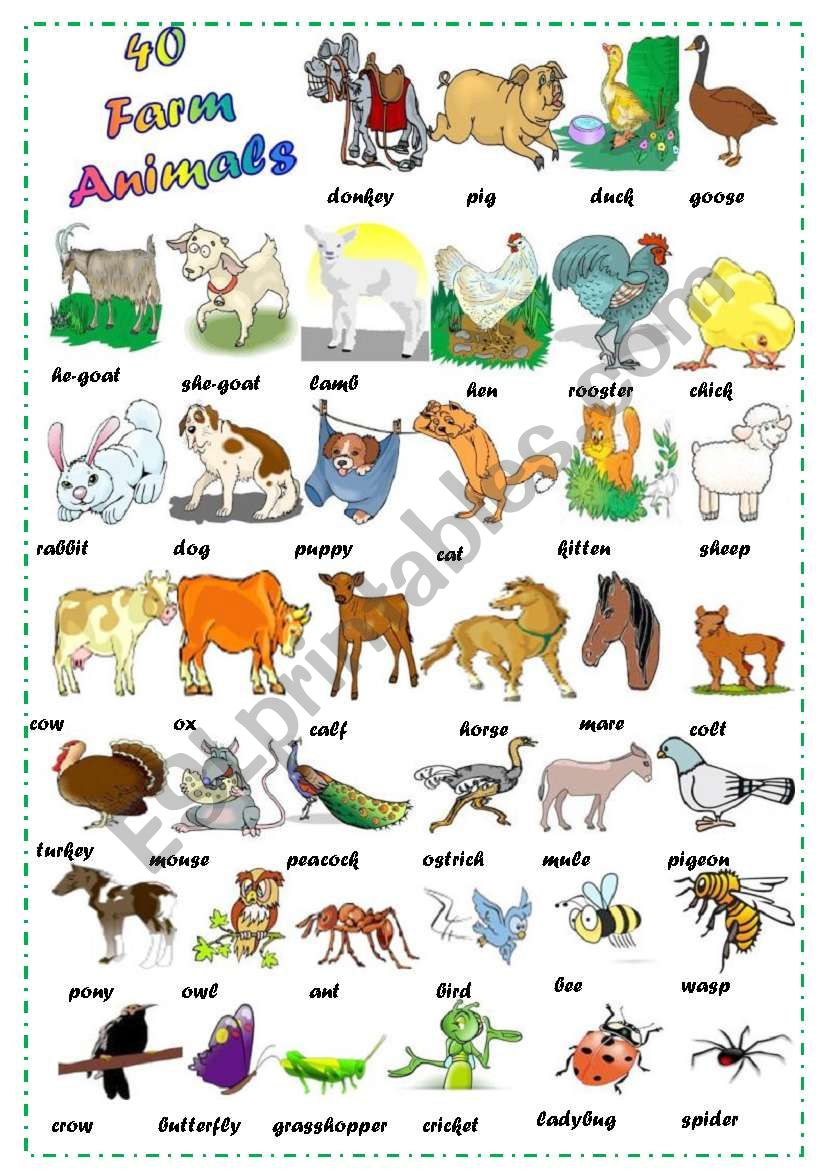 Find 40 Farm Animals worksheet