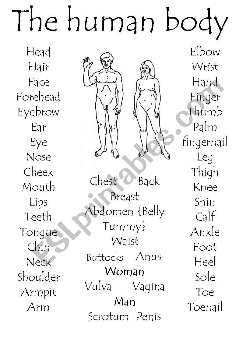 The Human body part 1 - ESL worksheet by madrabbitwoman