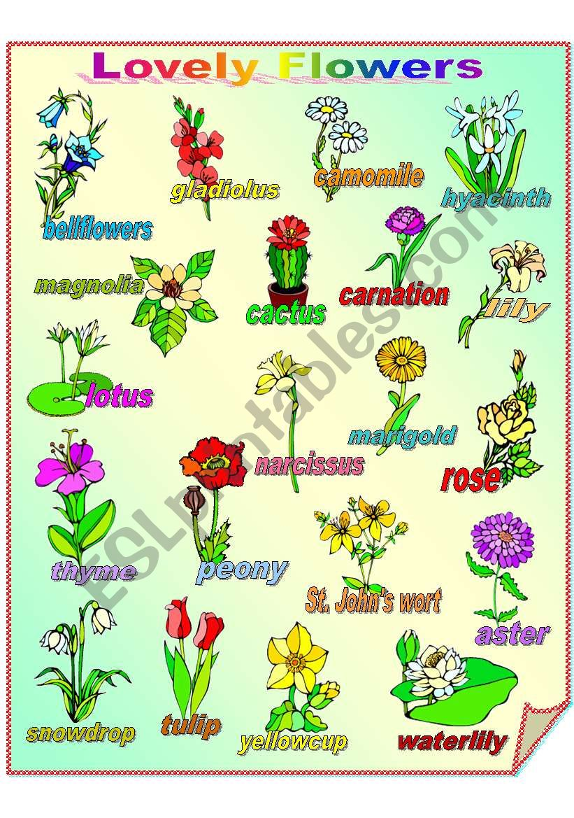 Lovely Flowers **fully editable