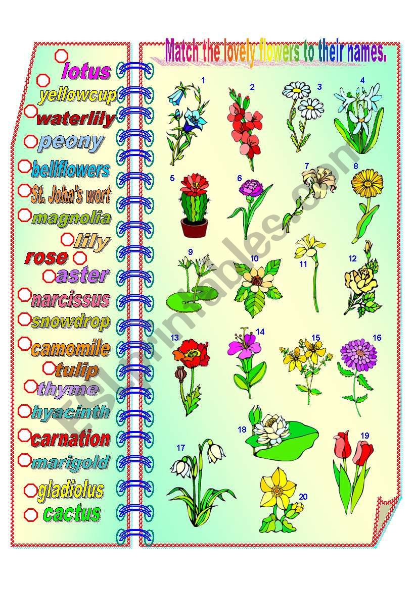Lovely Flowers - matching activity **fully editable