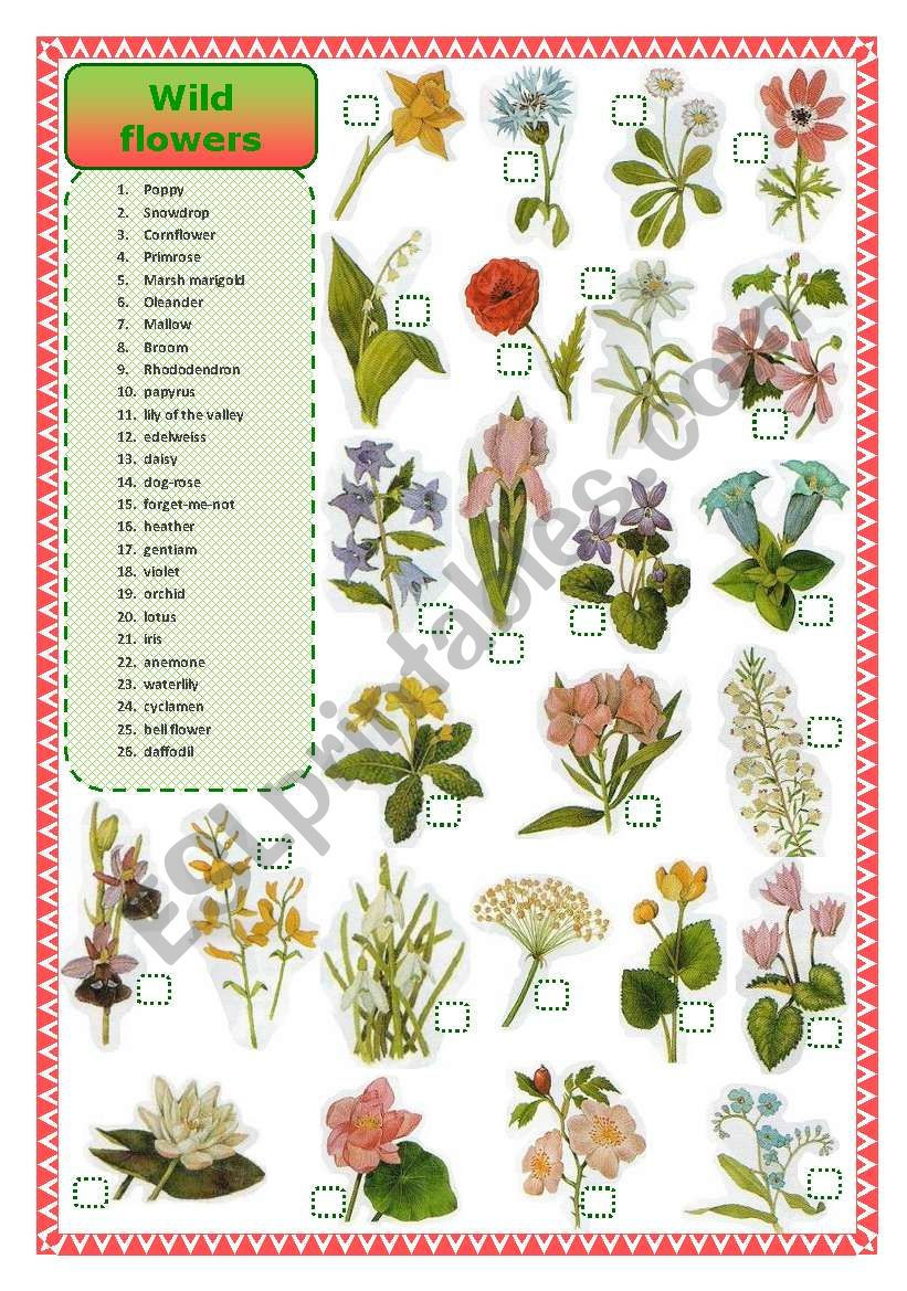 Wild flowers-matching worksheet