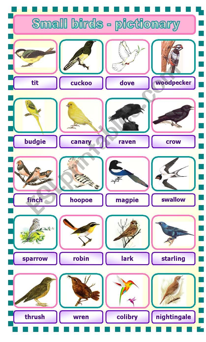 Small birds - pictionary worksheet