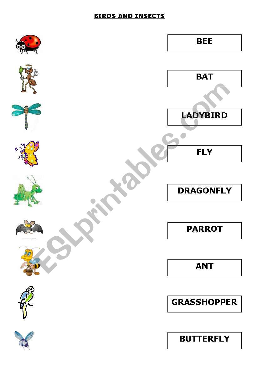 BIRDS AND INSECTS worksheet