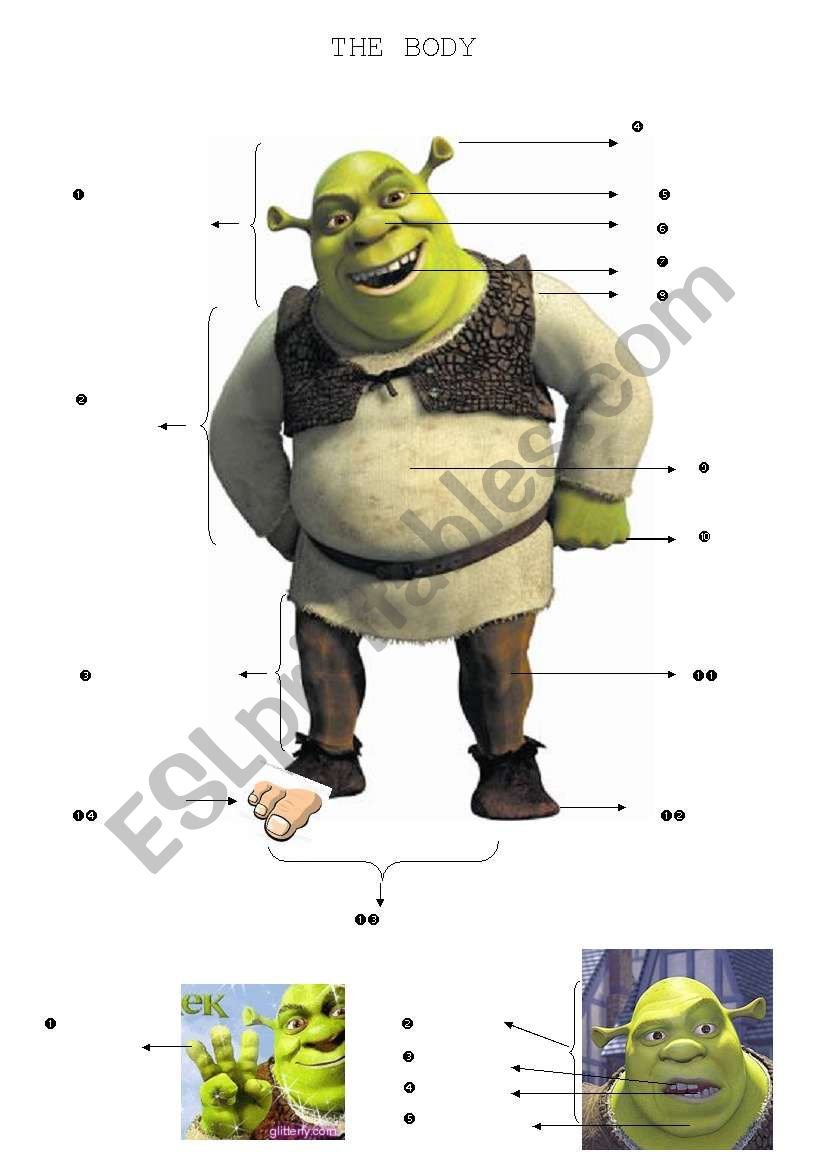 The Body (Shrek) worksheet