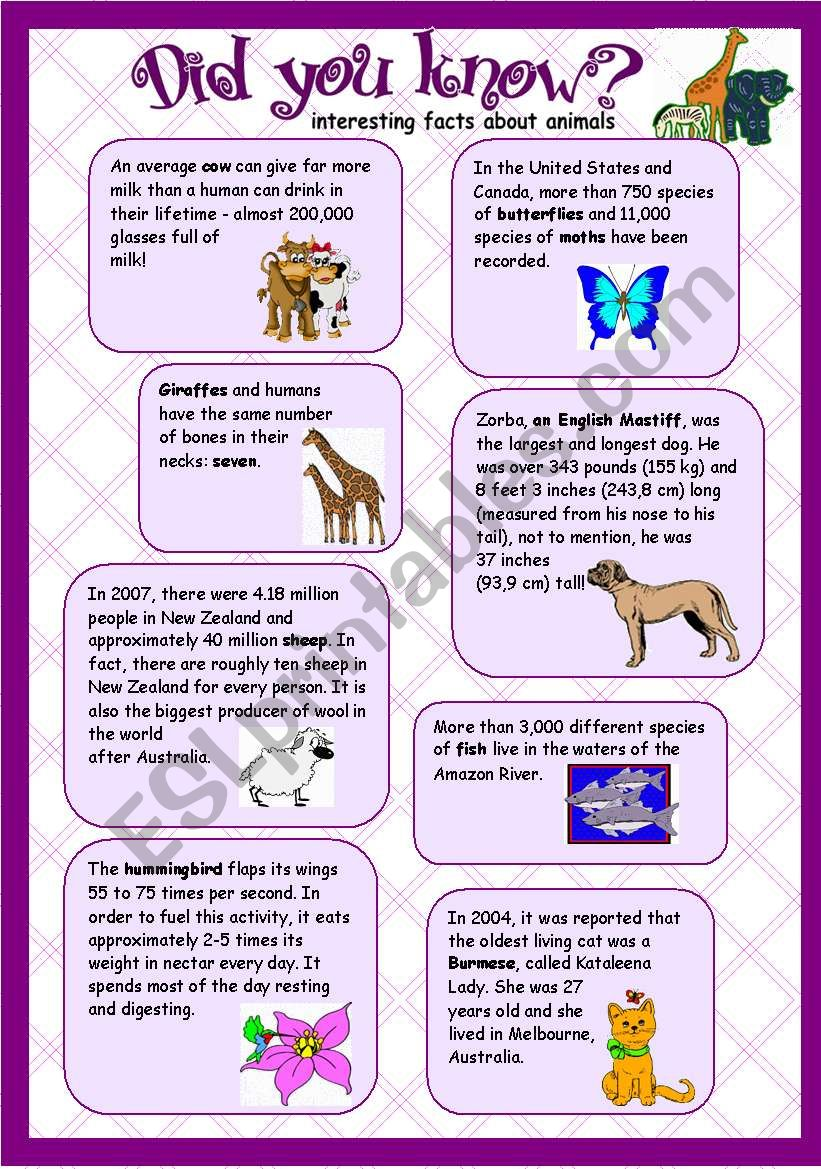 animal facts did you know re uploaded esl worksheet by poki