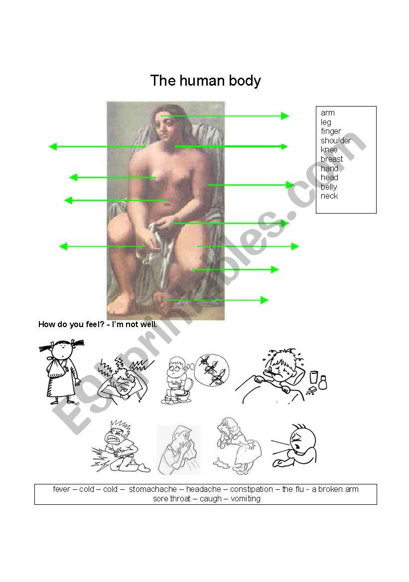 The human body worksheet