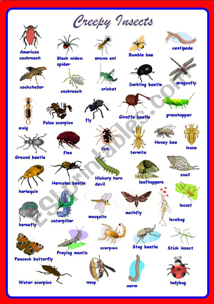 Creepy Insects Pictionary **fully editable