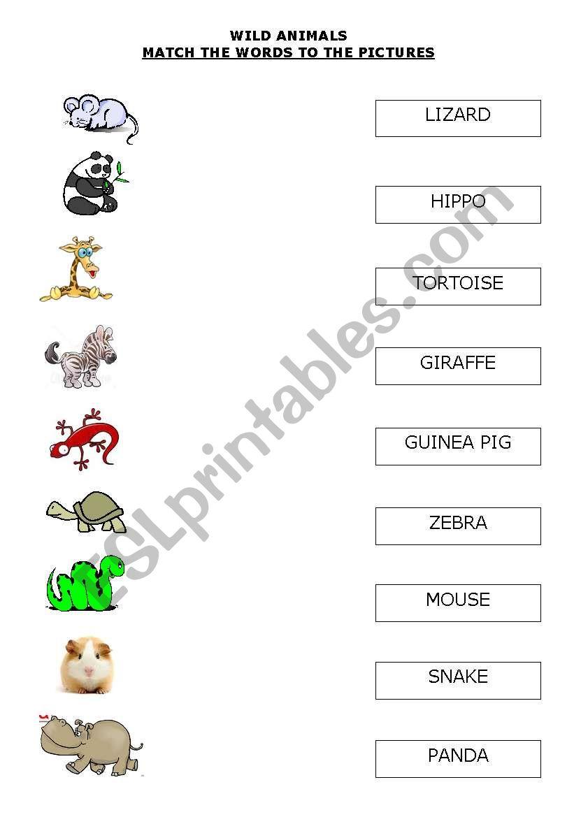 WILD ANIMALS 1 worksheet