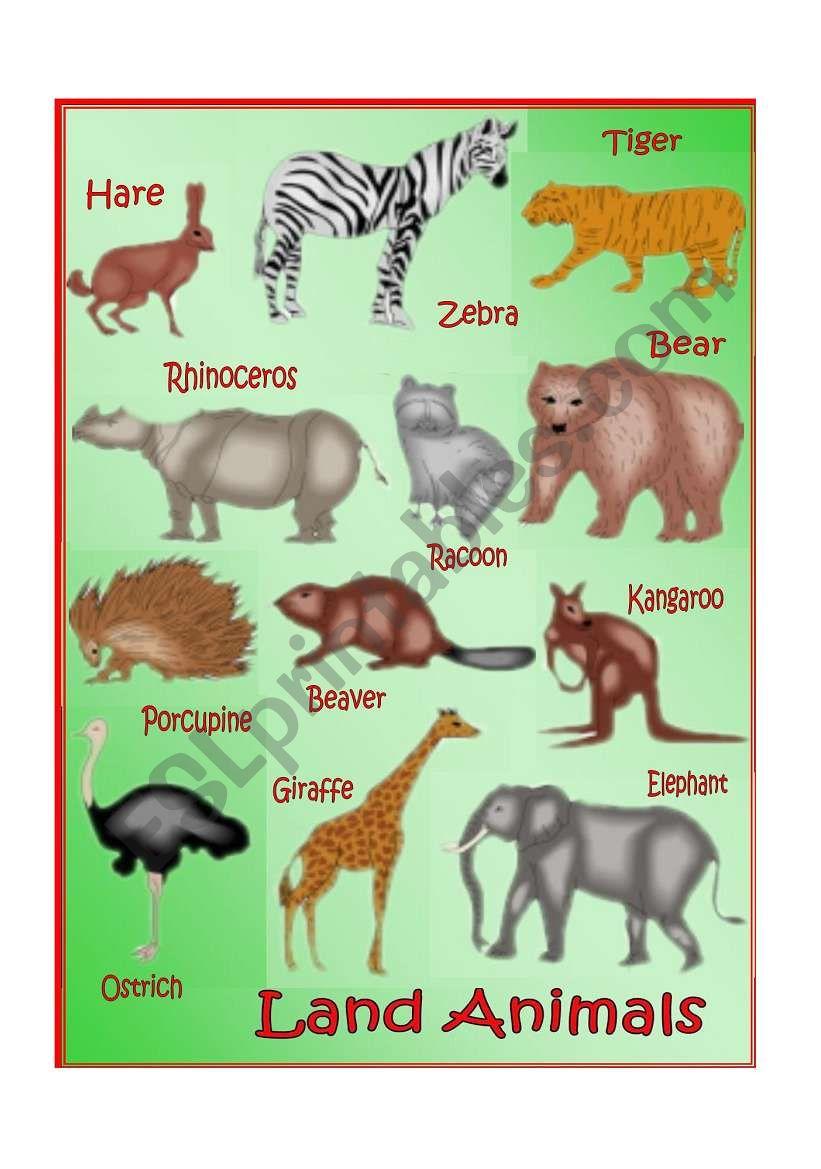 Land Animals worksheet
