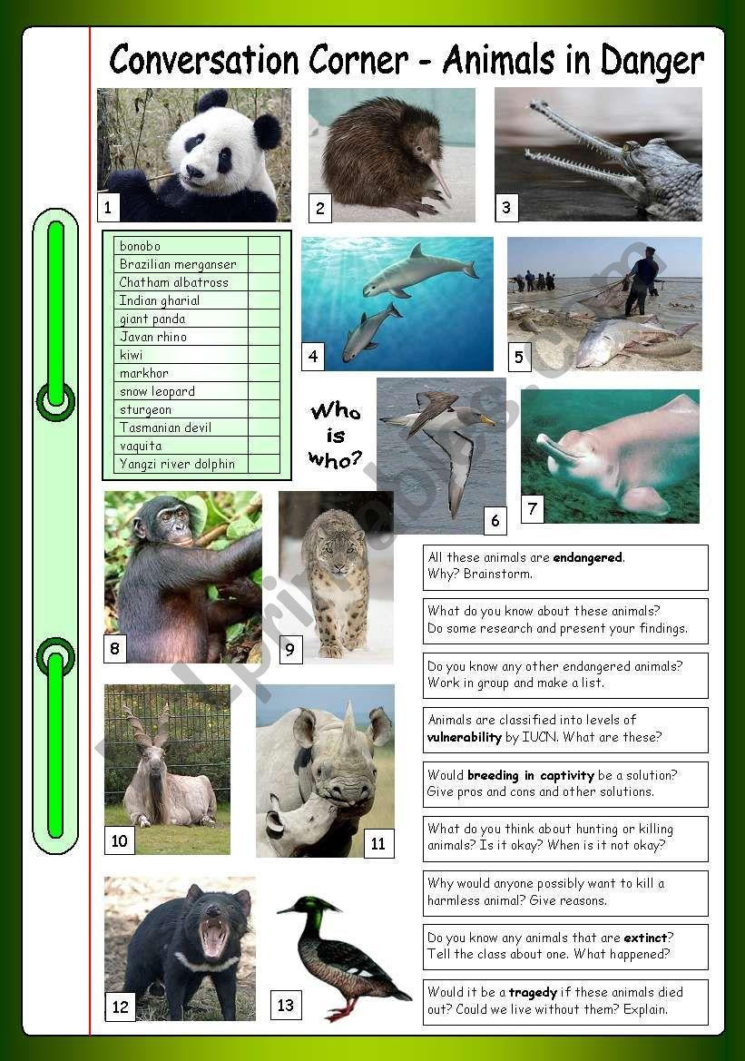 Conversation Corner: Animals in Danger