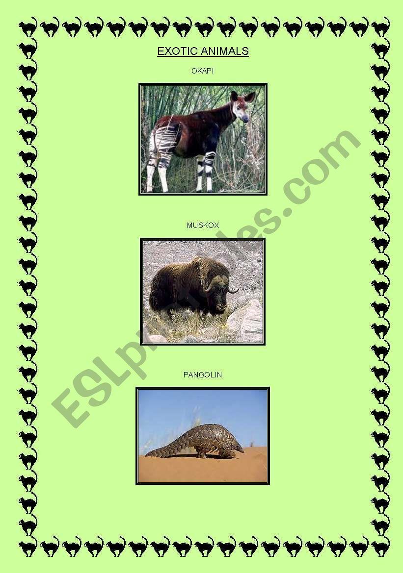 EXOTIC ANIMALS!! worksheet