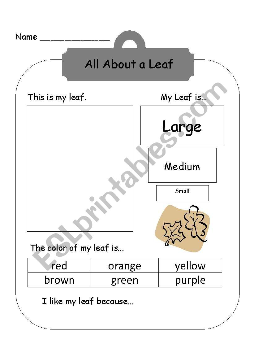 English worksheets: All About a Leaf