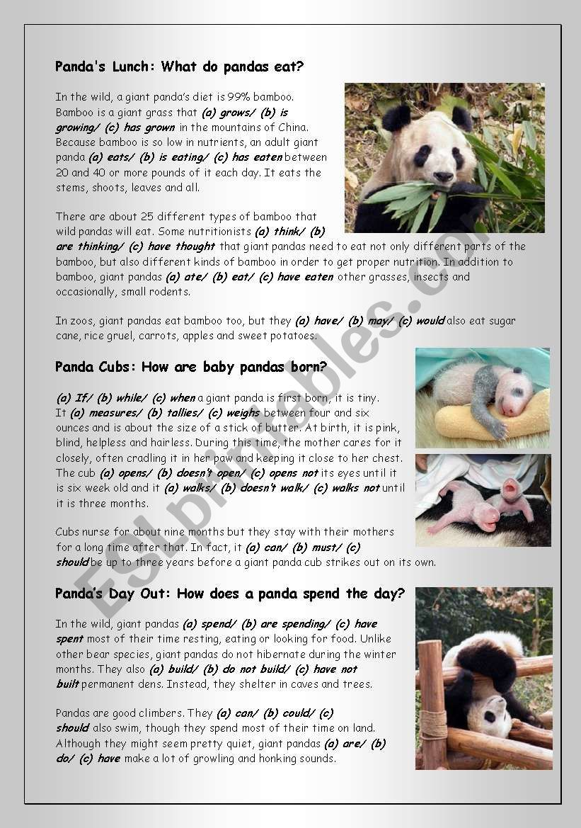 Reading (1): Pandas - Cuddliest of all Bears - ESL worksheet
