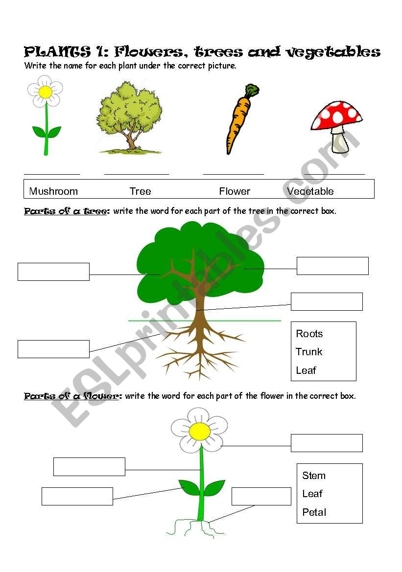 plants part 1 flowers trees and vegetables esl worksheet by sophie18. Black Bedroom Furniture Sets. Home Design Ideas