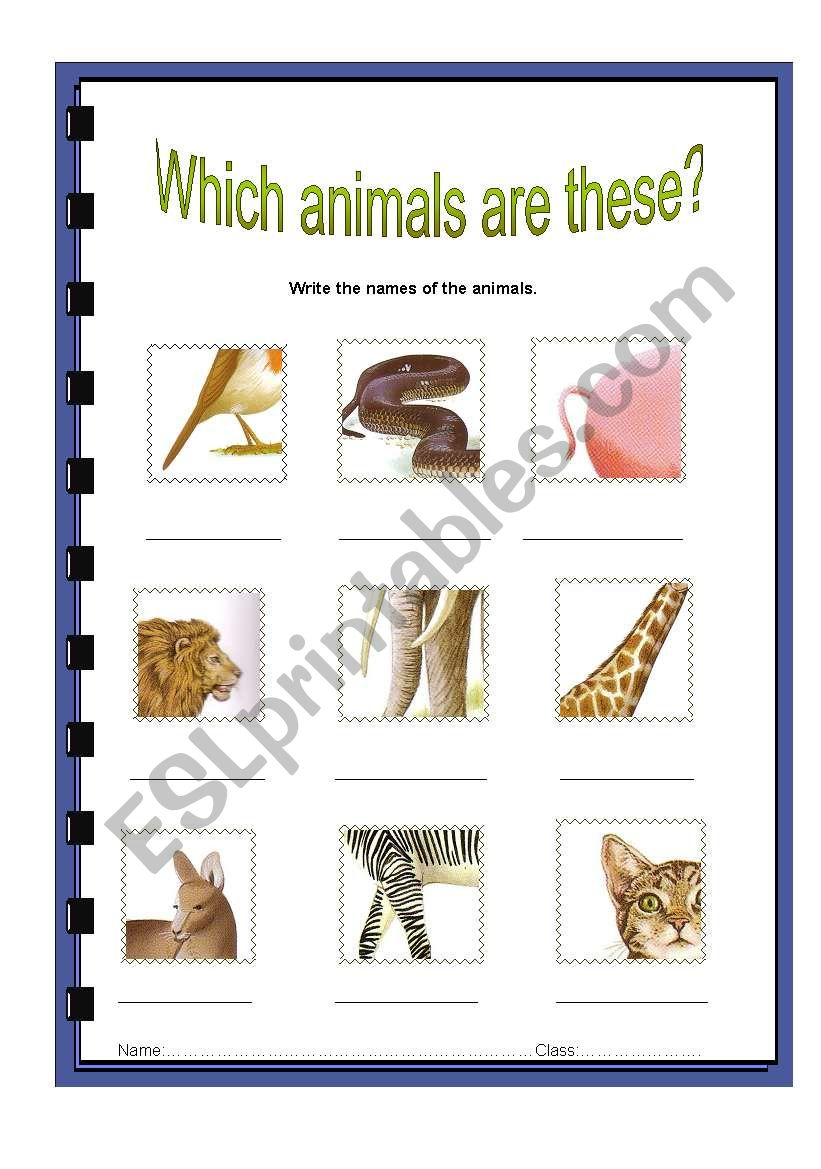 what animals are these? worksheet