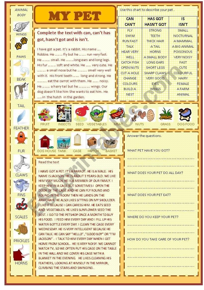 my pet worksheet