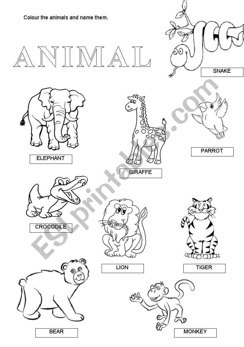 wild animals esl worksheet by anna22. Black Bedroom Furniture Sets. Home Design Ideas