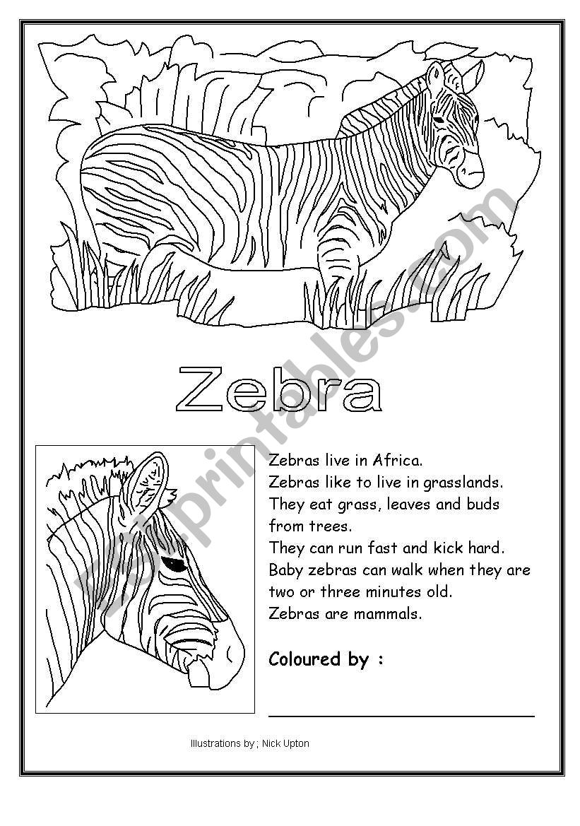 worksheet Zebra Worksheets english worksheets zebra coloring worksheet