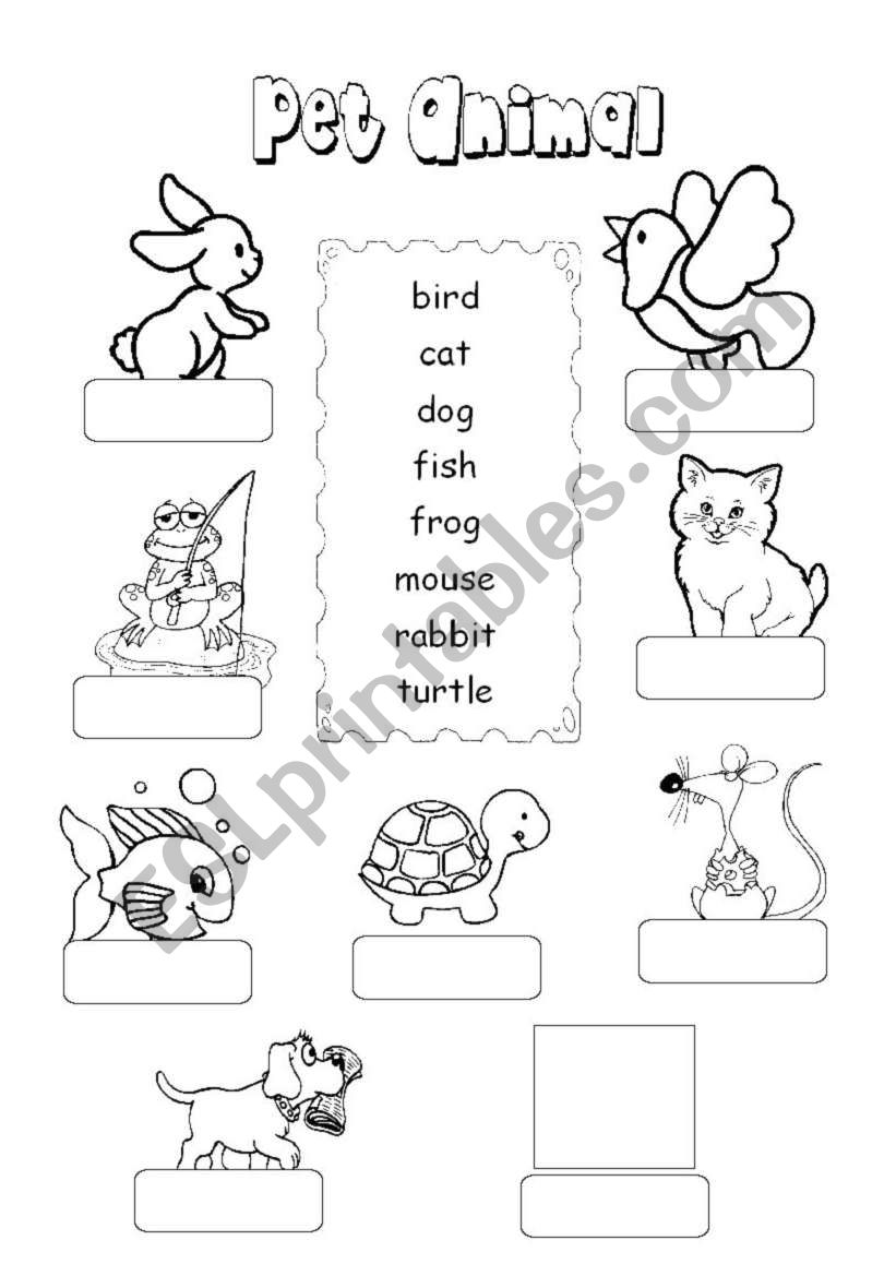 Pet Animal worksheet