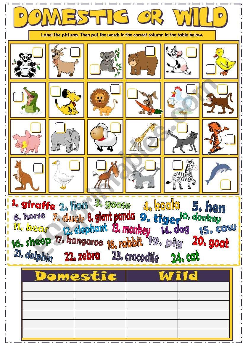 DOMESTIC or WILD ANIMALS (B&W + KEY)