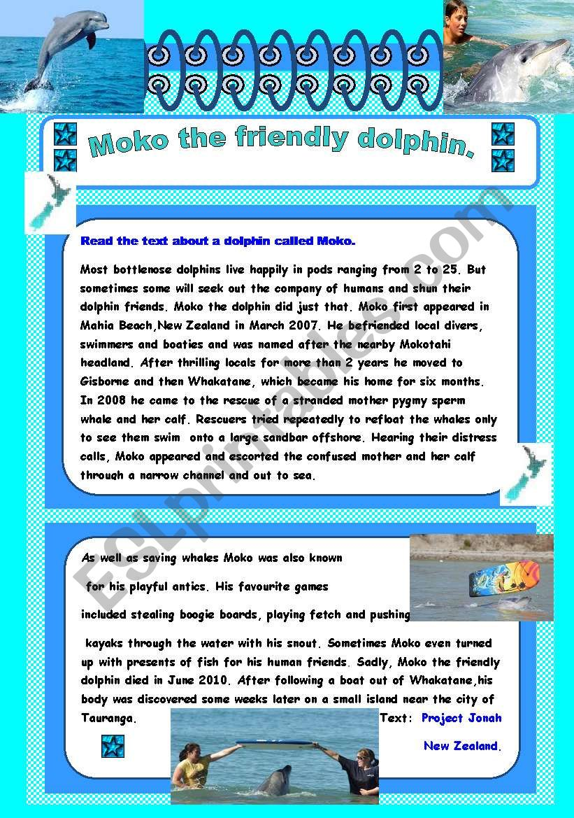 Moko the friendly dolphin worksheet