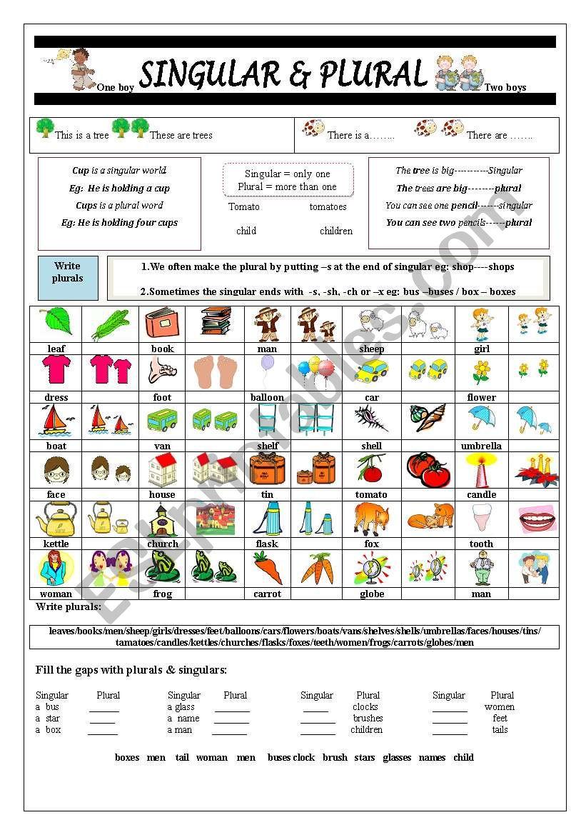 Singular & Plural worksheet