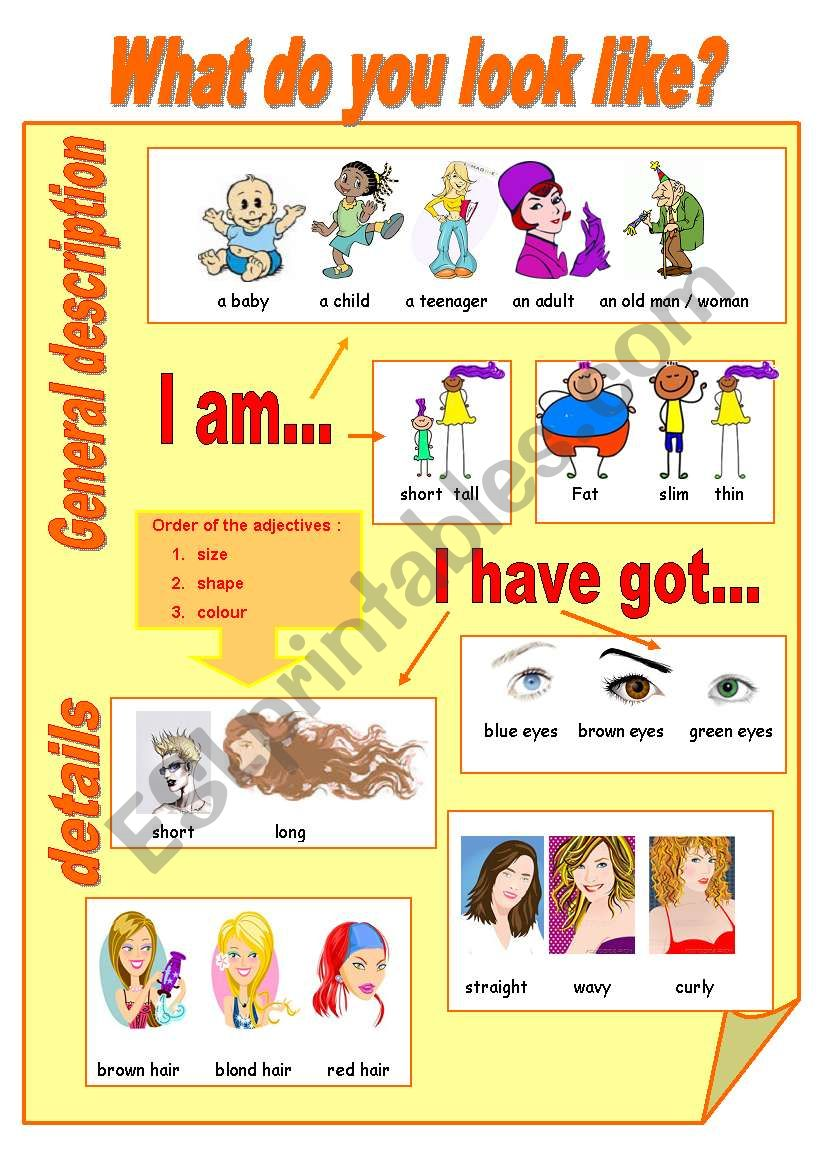 What do you look like? worksheet