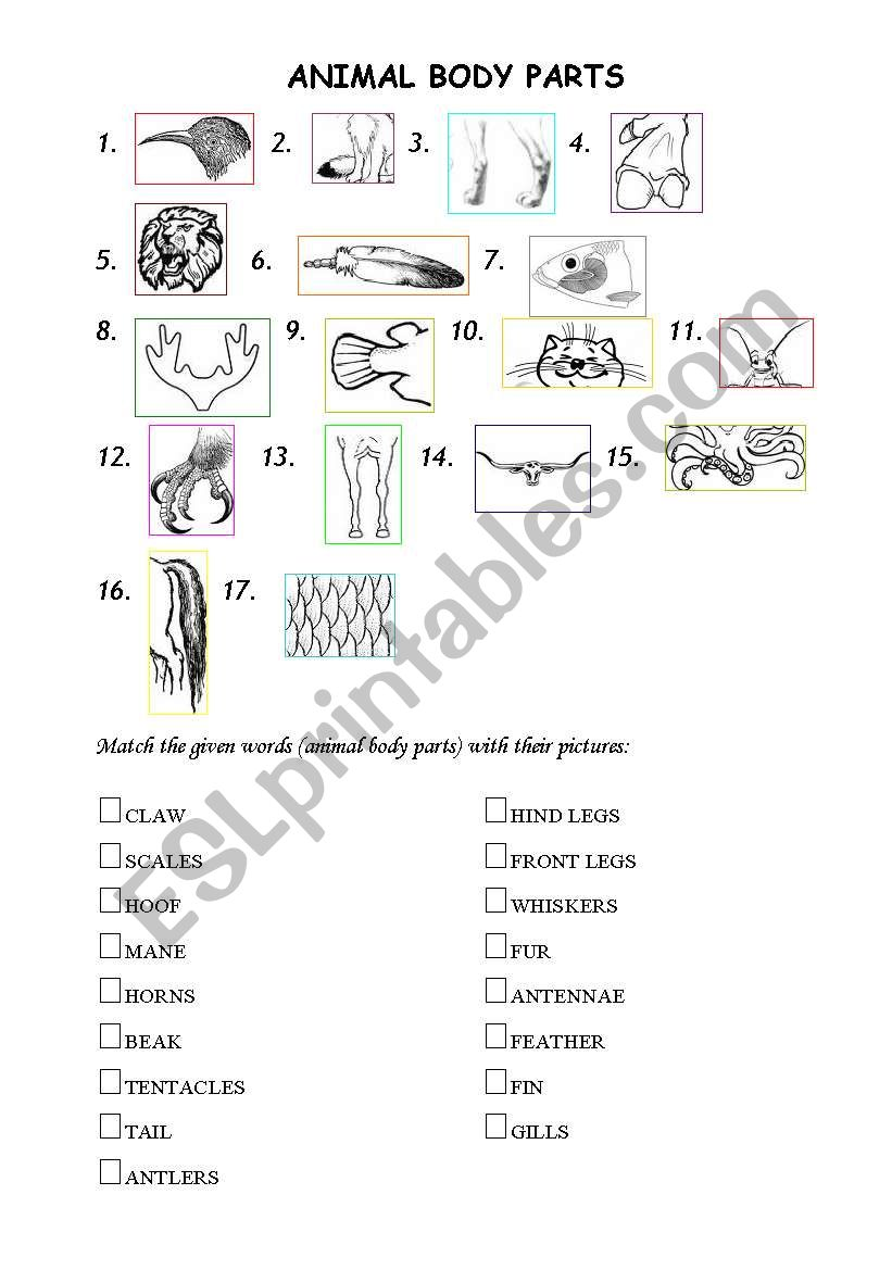 animal body parts esl worksheet by mazaism. Black Bedroom Furniture Sets. Home Design Ideas