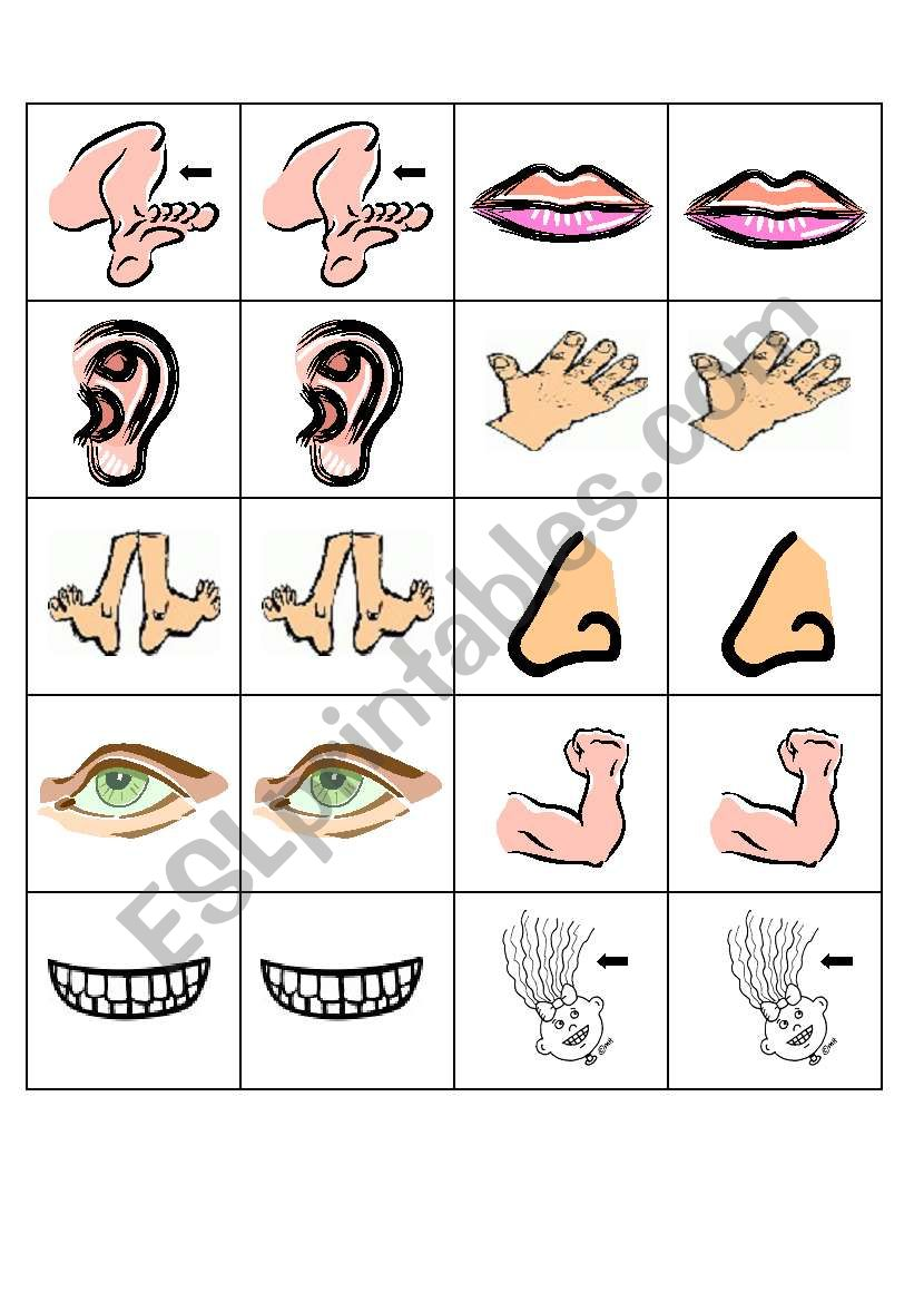Body parts pairs cards/flashcards