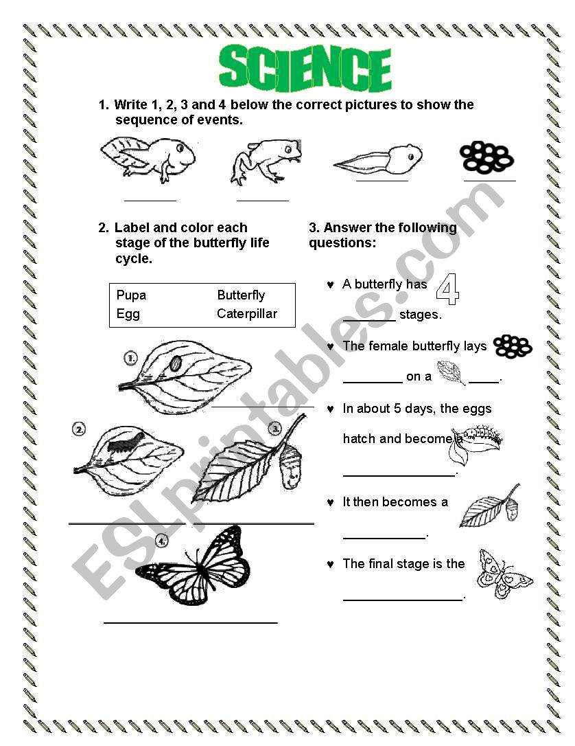 life cycle frog butterfly esl worksheet by lperecita. Black Bedroom Furniture Sets. Home Design Ideas