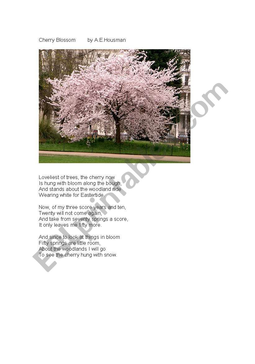 Cherry blossom poem worksheet
