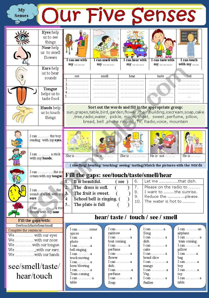Body : Our five senses  worksheet