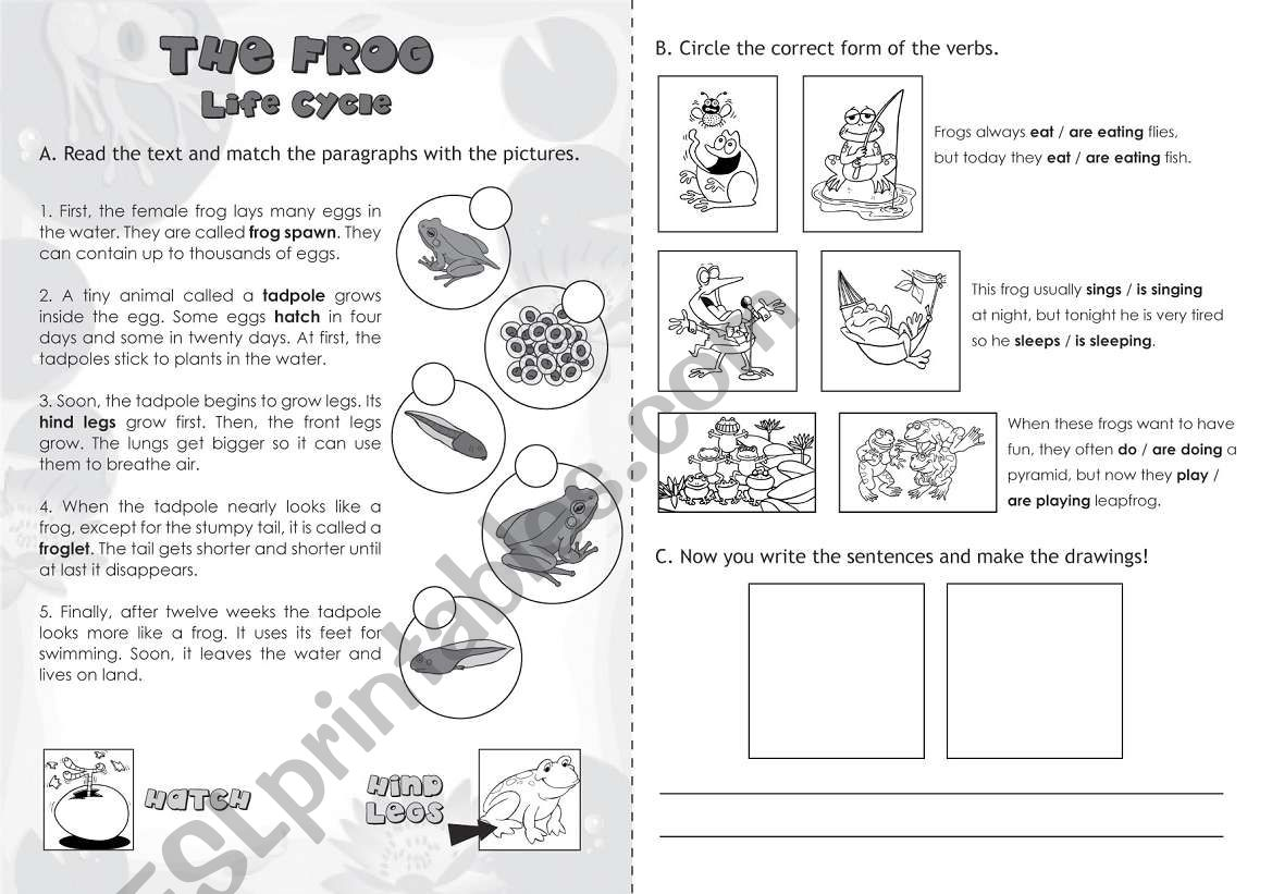 picture about Frog Life Cycle Printable referred to as The Frog: Daily life Cycle - ESL worksheet by way of jazchulinchu