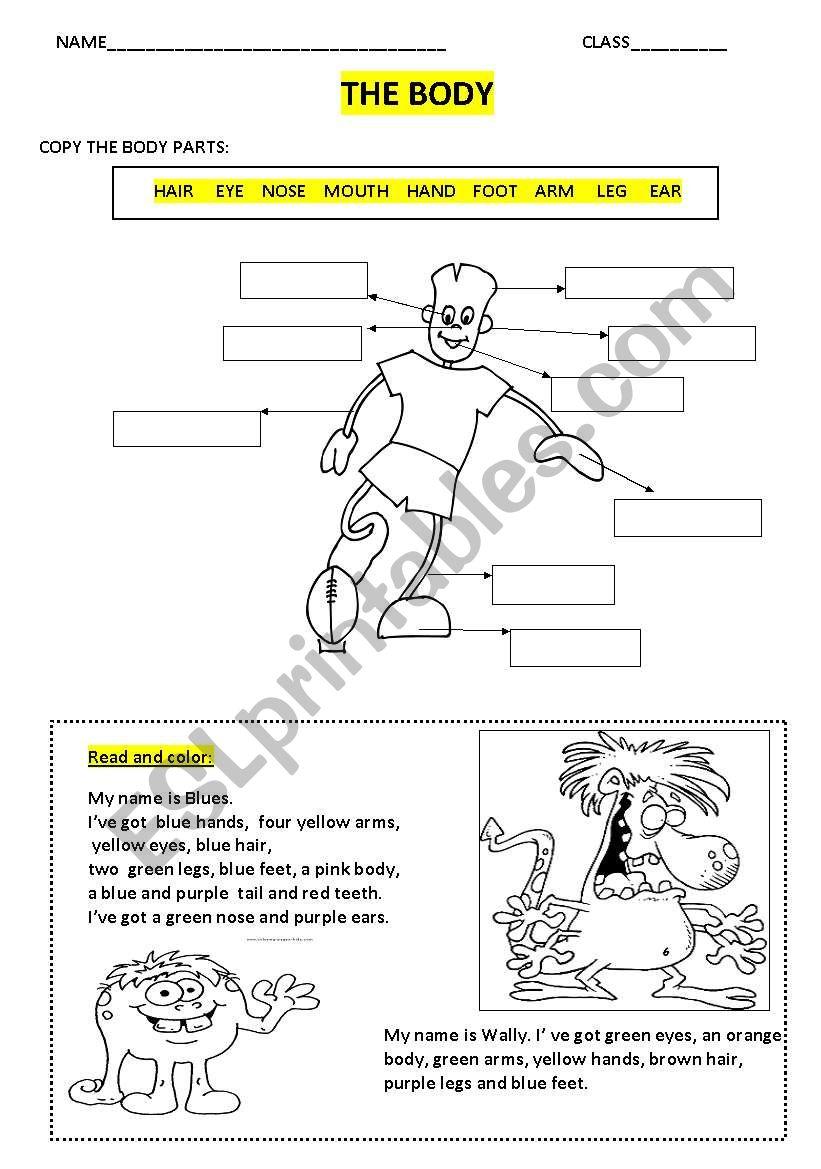 the body 2 worksheet