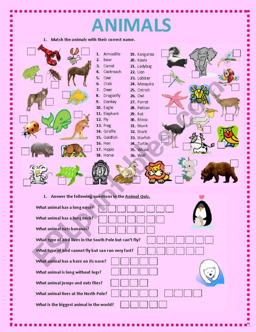 ANIMALS ACTIVITIES worksheet