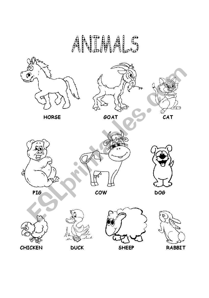 Animals worksheet worksheet
