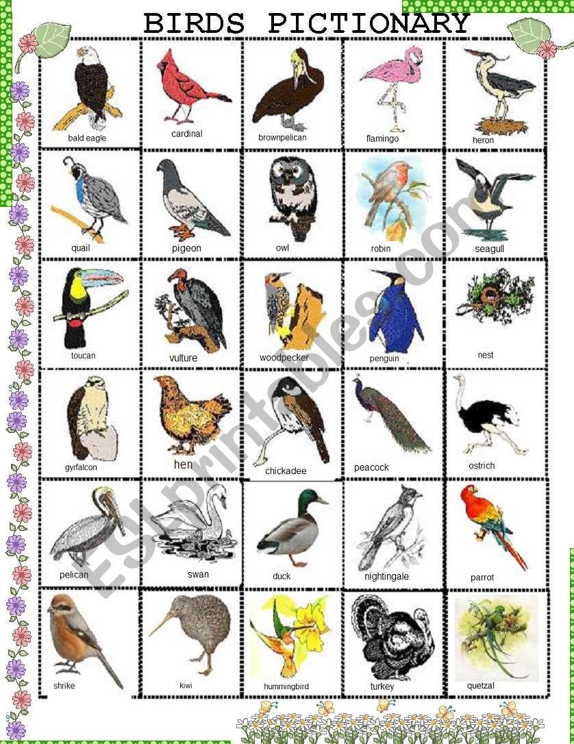 BIRDS PICTIONARY worksheet
