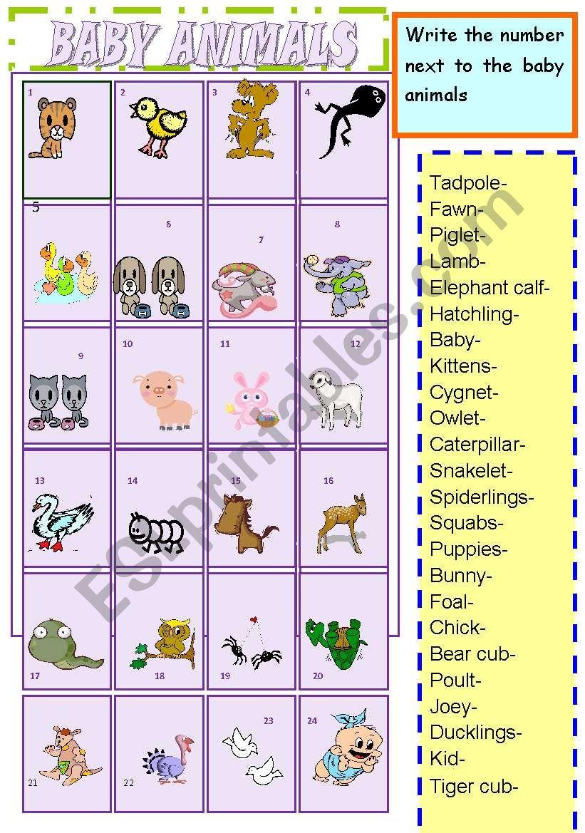baby animals worksheet