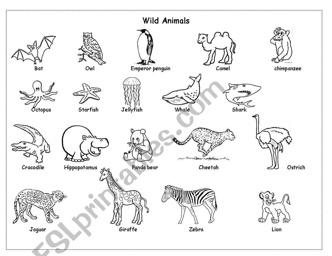 Wild animals worksheet