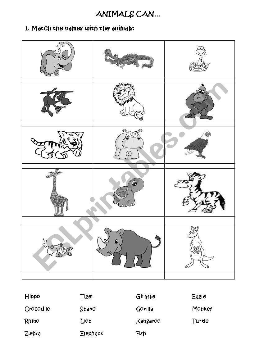 JUNGLE ANIMALS worksheet